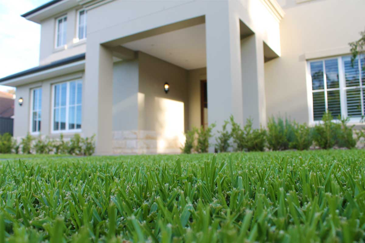 Landscaping Emu Plains Lawn and Front Garden