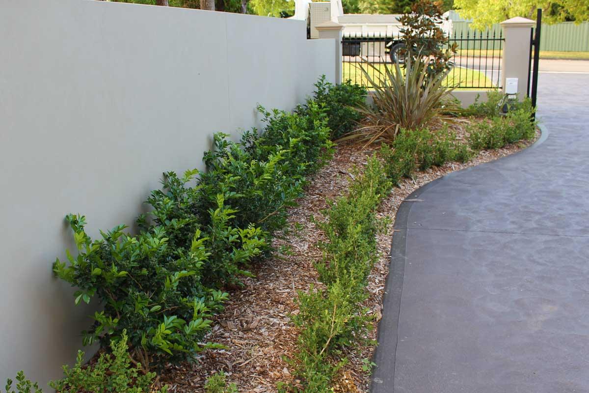 Landscaping Emu Plains Driveway Garden