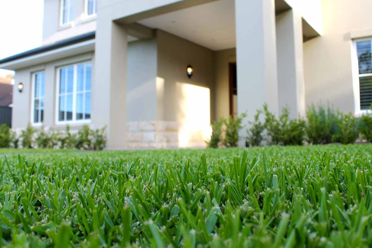 Landscaping Lawns and Turfing